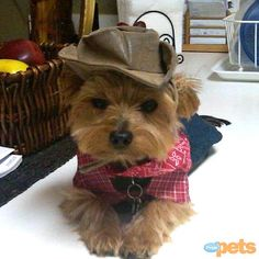 Git along, little doggie! Love this reader-submitted pet #Halloween costume! http://www.people.com/people/package/gallery/0,,20058392_20634463,00.html#21224513