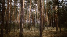11 schöne Wälder in und um Berlin | Mit Vergnügen Berlin