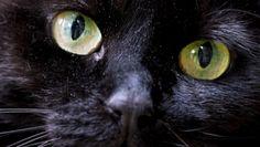 Le Chat qui Parlait à sa Maitresse [Vidéo]