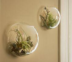 wall vases air plants