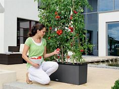 Growing Tomatoes on a Terrace Self Watering Containers, Self Watering Planter, Plant Containers, Container Gardening, Trough Planters, Patio Planters, Tomato Planter, Cottage Patio, Victory Garden