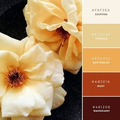 Canva Build your brand: 20 unique and memorable color palettes to inspire you marigold warm brand color palette Fall Color Palette, Colour Pallette, Colour Schemes, Color Combos, Color Schemes Colour Palettes, Unique Colors, Vibrant Colors, Sunset Colors, Color Swatches