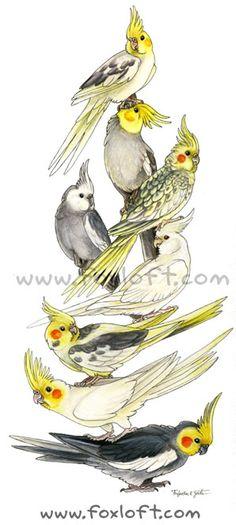 Cockatiel Art Stack Painting Print Wall art bird by foxfeather Bird Drawings, Animal Drawings, Painting Prints, Wall Art Prints, Painting Art, Australian Birds, Cockatiel, Cute Birds, Bird Art