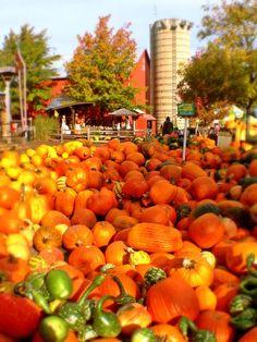 Bengtson's Pumpkin Farm in Homer Glen, IL