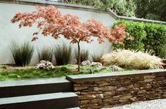 """Результат пошуку зображень за запитом """"japanese garden how to"""""""