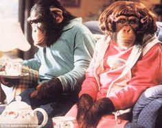 PG Tips chimp Choppers in one of the PG Tips adverts that aired during the 1970s
