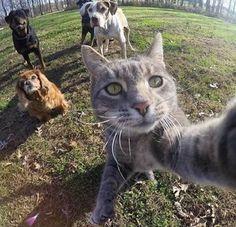 """""""Ngã ngửa"""" với chú mèo biết chụp ảnh selfie """"sống ảo"""" - Yeah1.com"""