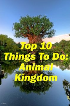 These top ten things to do in Disney's Animal Kingdom at Walt Disney World. Tips will help you plan your experience at Animal Kingdom.