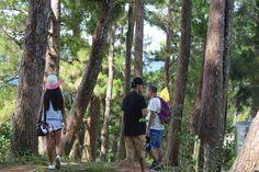 EXPLORING THE TRANQUIL LANDSCAPE OF BUCARI – lakwatserongdoctor Exploring, Landscape, Scenery, Explore, Research, Corner Landscaping, Study