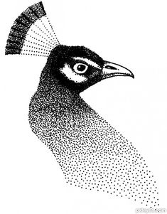 This picture, named peacock dots, was created by wooyuenfoo for the supple stipple drawing contest. Dotted Drawings, Art Drawings Sketches, Ink Illustrations, Animal Drawings, Pencil Drawings, Dot Art Painting, Painting & Drawing, Toys Drawing, Peacock Drawing