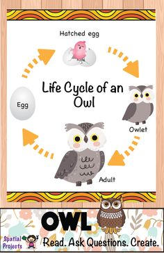 Life Cycle of the Owl (Forest Animal) - Inquiry-based learning *Includes lapbook making guide, craft pattern, worksheets, reading passages, fun facts Owl Activities, Infant Activities, Writing Activities, Owl Babies, Baby Owls, Owl Facts For Kids, Expository Writing, Inquiry Based Learning, Nocturnal Animals