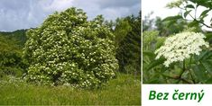 Herbs, Health, Plants, Food, Health Care, Essen, Herb, Meals, Plant