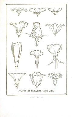 Flower Drawing Botanical – Flower – Flower line drawings Flower Line Drawings, Botanical Line Drawing, Art Drawings, Botanical Drawings, Botanical Flowers, Botanical Illustration, Botanical Prints, Plant Drawing, Painting & Drawing