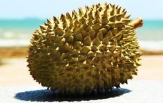 Health Benefits of Durian | Organic Facts