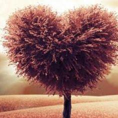 My tree of love