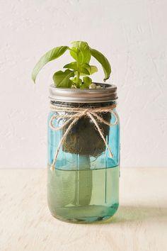 modern jar hydroponic planter - Google Search Herb Garden Kit, Garden Tips, Kitchen Herbs, Grow Kit, Plant Science, Hydroponics, Garden Planning, Sprouts, Outdoor Living