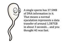 Esperma y 1.587 GB?  ¿Sabía usted que un solo espermatozoide tiene información 37.5MB o ADN en él?  Esa es una enorme 1.587 GB cada vez que un hombre eyacula.  Esto es más de un terabyte de datos.  El cuerpo humano es un disco duro grande!  Eso es suficiente los hechos inútiles para hoy.