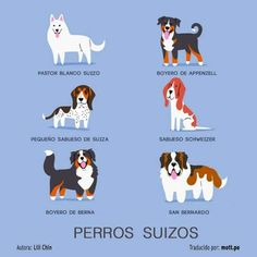 Dog Breeds print: SWISS DOGS art print (dog breeds from Switzerland) Stampa di razze canine: stampa d'arte SWISS DOGS (razze canine dalla Svizzera) Pet Dogs, Dogs And Puppies, Doggies, Dogs 101, Animals And Pets, Cute Animals, Types Of Dogs, Dog Illustration, Illustrations