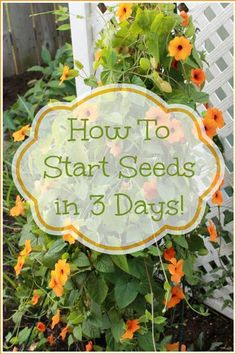 The first steps with planting most any plant your heart desires is the germination of a seed. With this easy to follow and simple step by step instruction, you will learn who to start a seed in only three days. You will be guided along with beautiful high-res photos and descriptions of what the photographs …