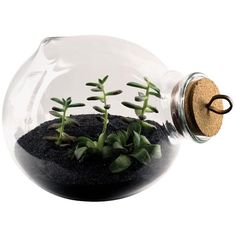Esque Studio Xtra-Terrarium ($800) ❤ liked on Polyvore featuring home, home decor, floral decor, fillers, plants, décor, flowers, backgrounds, saying and quotes