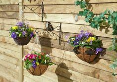 Balkon Bepflanzen Topfen Tulpen Petunienn