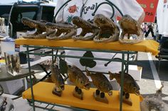 *If you need an alligator head, you can find them in flea markets