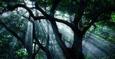 Light - A fog morning in Pena Park, Sintra, Portugal  http://jfeteira.1x.com