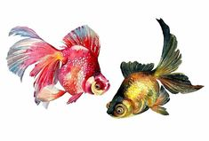 Goldfish Art Watercolor Goldfish PaintingFish Art by ARTTARATET
