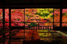 京都の瑠璃光院が急遽、特別拝観を実施したことを知りまして行ってきました。 今年はもうこの景色を見ることはできないと断念しておりましたが、出会えてよかったです^^ あまりうまく撮れませんでしたがご勘弁ください。 まずは2階の間からアップします。