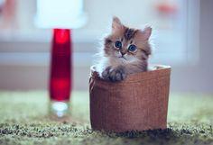 Most-Photogenic-Kitten-25