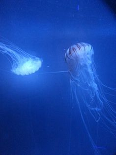 Jelly fish at the sea life centre