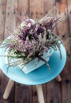 Buitenleven | Struikheide=Tuinplant vd Maand september - Stijlvol Styling woonblog www.stijlvolstyling.com