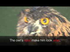 ▶ RHYMING WORDS & Song (Learn English) PRESCHOOL (K-3) - YouTube Rhyming Preschool, Owl Eyes, Rhyming Words, Learn English, Songs, Learning, Animals, Youtube, Learning English