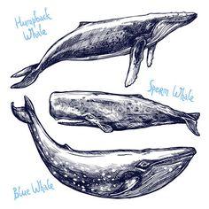 Dibujado a mano diferentes ballenas — Ilustración de stock #82705828