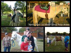 Spirit - Welch pony (13 hands)