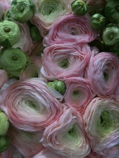 There isn't a more gorgeous flower than the ranunculus. This was my bridal bouquet flower. Most Beautiful Flowers, My Flower, Pretty Flowers, Pink Flowers, Ranunculus Flowers, Simply Beautiful, Pink Roses, Cactus Flower, Tea Roses