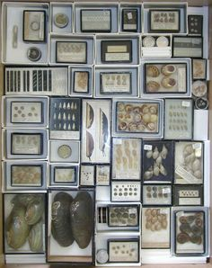 A collection of freshwater mollusks stacked in small cardboard boxes