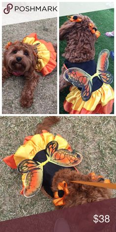 BUTTERFLY DOG HALLOWEEN CUSTOME Only used once. Perfect condition. Size Medium. This is a cute tutu with the butterfly wings and glitter. Perfect for dog or cat from 12-25 pounds. Accessories