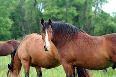 horse / travelers