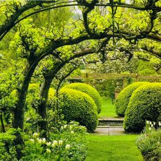 a beautiful garden with trellis-shaped trees - quite magical!