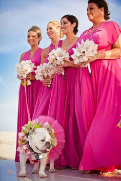 Lola The Flowergirl. I want this dog to be famous.
