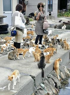 Visitors interact with cats on Aoshima Island in Japan in October --- lots of cats!! omg