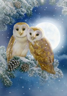 Full Square Diamond Painting Mosaic Home Decoration Diamond Embroidery DIY Cross Stitch Set Animal Picture Crafts Beautiful Owl, Animals Beautiful, Cute Animals, Owl Photos, Owl Pictures, Owl Artwork, Owl Wallpaper, Tier Fotos, Christmas Paintings