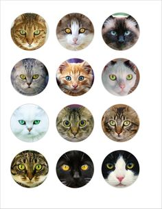 Cute Bunny, Cute Cats, Printable Crafts, Printables, Download Digital, Photo Chat, Cat Face, Cat Eyes, Bottle Cap Crafts