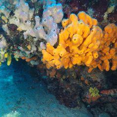 Ayvalık dalış okulu - ida dalış merkezi #scuba #scubadiving #diving #underwater #dalisnoktam #ayvalikdalis #daliskursu #dalisokulu #idadalismerkezi www.idadiving.com