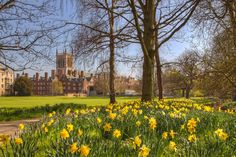 ***Spring at St John's College (Cambridge, England) by Roger E