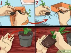 Image titled Create Tree Flower Beds Step 13