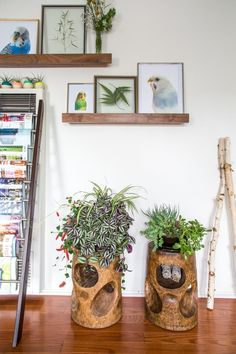 4 Things to Learn About Decorating With Houseplants From Erick's Modern Organic Burbank Mix | Apartment Therapy