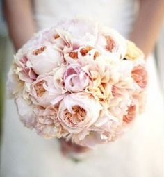 """The bridal bouquet will be a round clutch of cream hydrangeas, """"Juliet"""" garden roses, """"café au lait"""" dahlias, """"keira"""" garden roses, pale pink dahlias, and blush pink spray roses wrapped in ivory ribbon with the stems showing"""