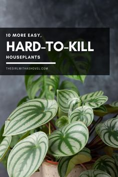Depending on the type of indoor plant, some can be a lot more picky and more difficult to keep happy in an indoor environment... SOME HOUSEPLANTS ARE HARDER THAN OTHERS... GO EASY ON YOURSELF AND GET ONE OF THESE!!! Hard to Kill Houseplants | Indoor Plants that are Hard to Kill | House Plants Decor, Plant Decor, Pothos Vine, Popular House Plants, Ti Plant, Apartment Plants, Crassula Ovata, Low Light Plants, Dish Garden